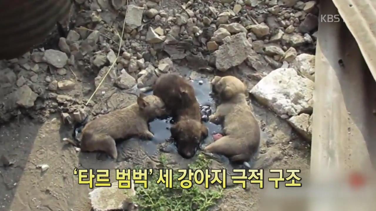 [디지털 광장] '타르 범벅' 세 강아지 극적 구조