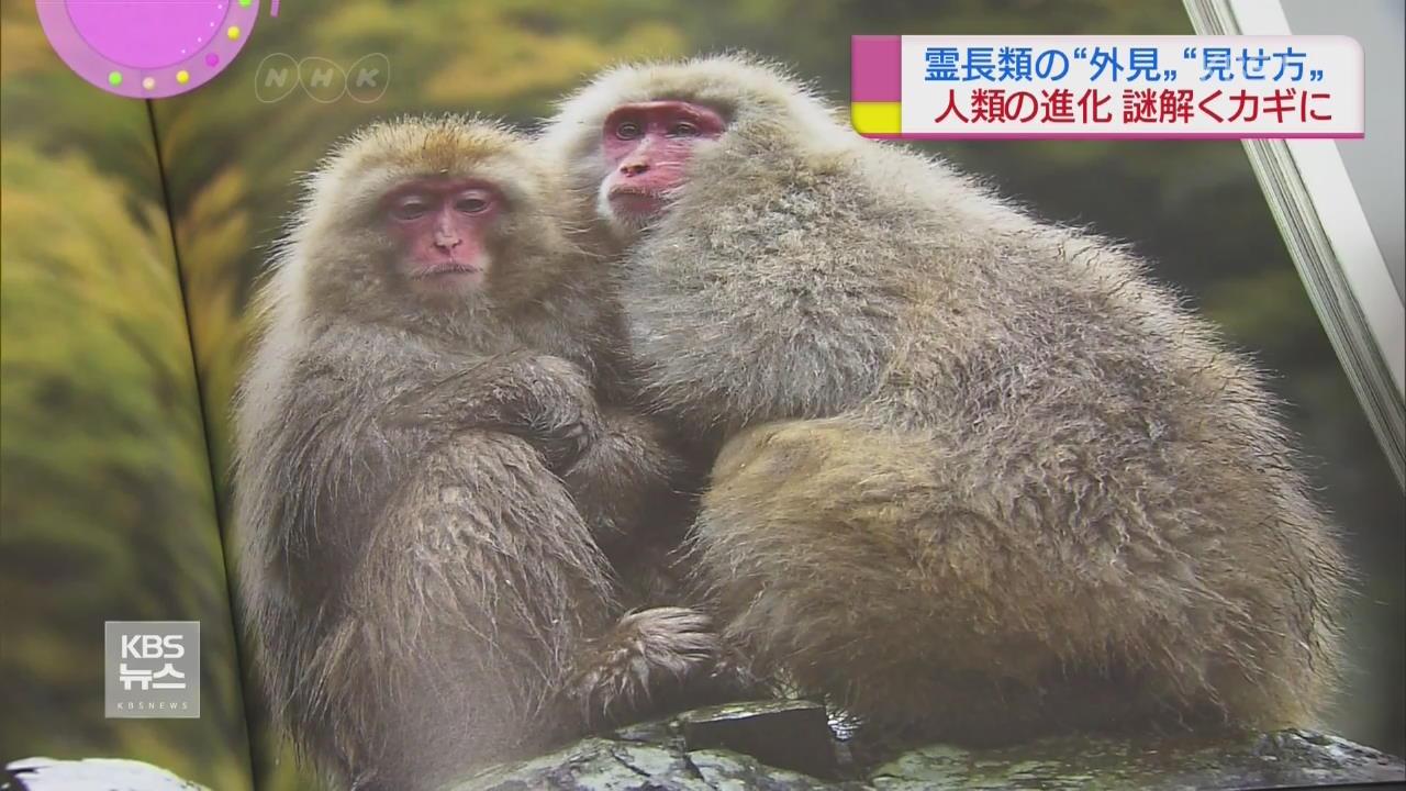 """日 """"원숭이도 겉모습 중시…뇌 발달"""""""