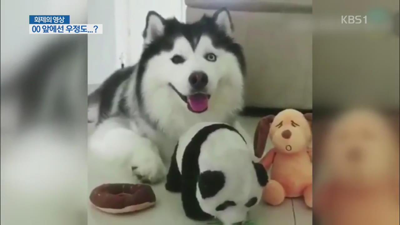 [화제의 영상] OO 앞에선 우정도…?