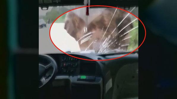 [고현장] 단번에 버스 유리창이 '쾅'…야생 코끼리의 위력