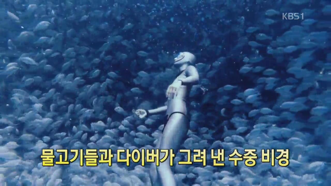 [디지털 광장] 물고기들과 다이버가 그려낸 수중 비경