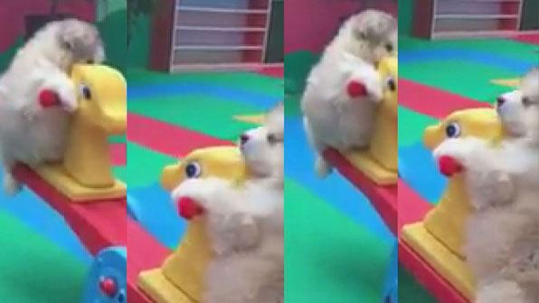 """[고봉순] """"누가누가 더 무겁나~""""…시소 타는 강아지들"""