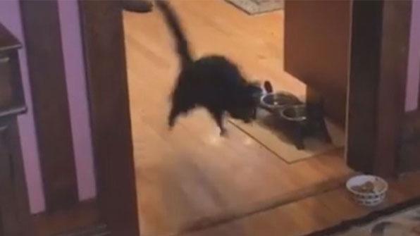 [고봉순] 부엌 앞에서만 점프력 만렙되는 고양이