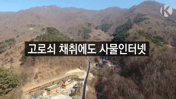 """[라인뉴스] 고로쇠도 사물인터넷 접목…""""생산이력 통합관리"""""""