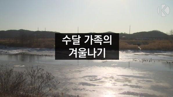 [라인뉴스] 인공습지 정착…수달 일가족의 겨울나기