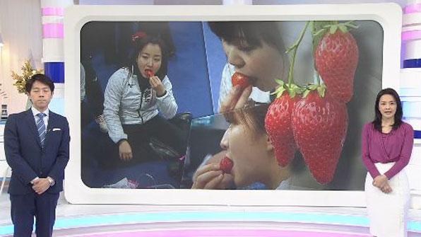 [특파원리포트] 우리 '딸기'가 그리 부럽더냐?…'日 딴죽걸기'도 정도껏