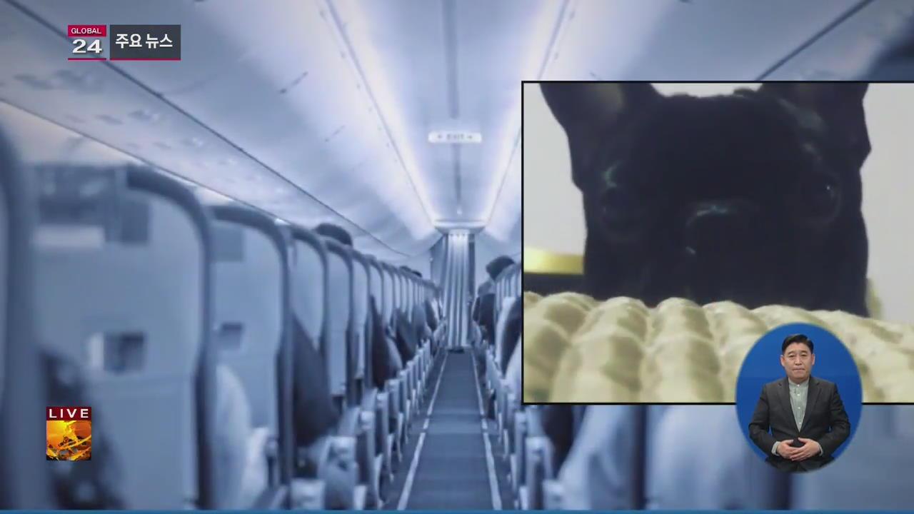 [글로벌24 주요뉴스] 美 항공기 기내 선반에 실린 반려견 질식사