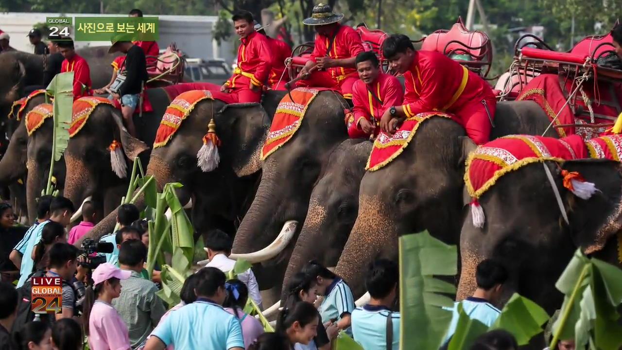 [글로벌24 사진] 코끼리의 날 외