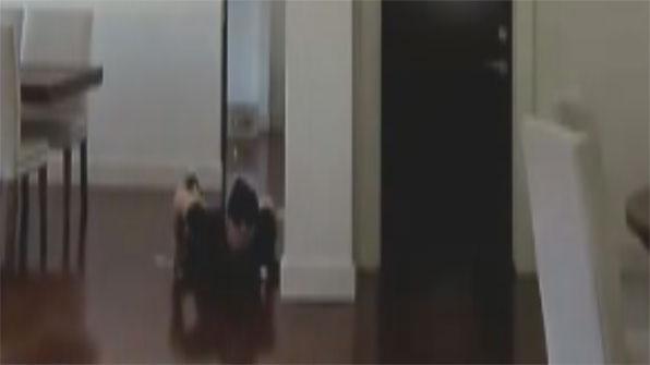[고현장] 가정집 CCTV에 찍힌 도둑의 모습, '이게 뭐람?'