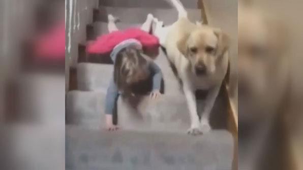 """[고봉순] 반려견 계단 내려오기 교육 """"부작용이 있을 줄이야~"""""""