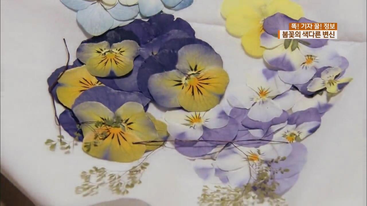 [똑! 기자 꿀! 정보] 봄꽃의 변신…'색다르게 즐겨요'