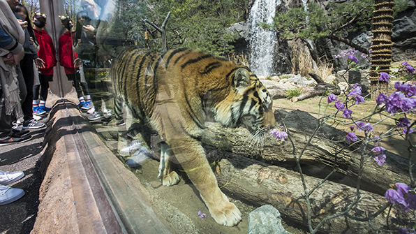 에버랜드 동물원, 보존·교육 강화한 '생태형 동물원'으로