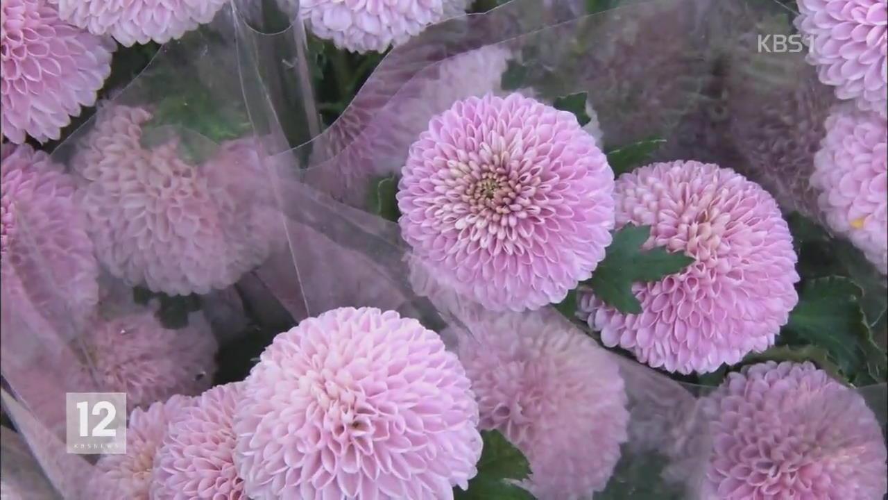 [정보충전] 봄꽃의 변신…색다르게 즐겨요