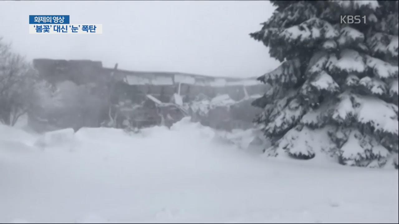 [화제의 영상] '봄꽃' 대신 '눈' 폭탄