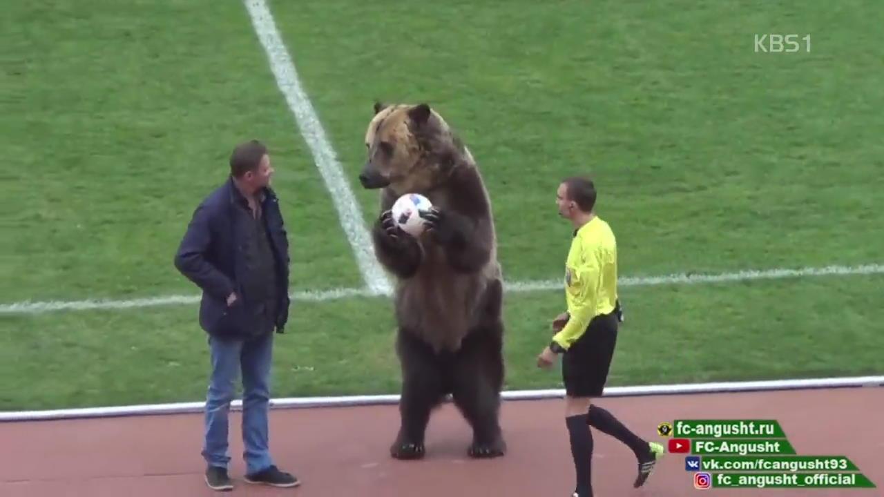 [오늘의 영상] 축구장에 곰이 나타난 이유?