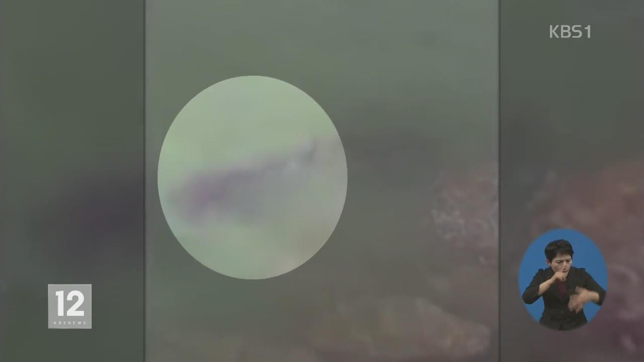 태국 '상어 주의보'…휴양지 후아힌서 관광객 부상