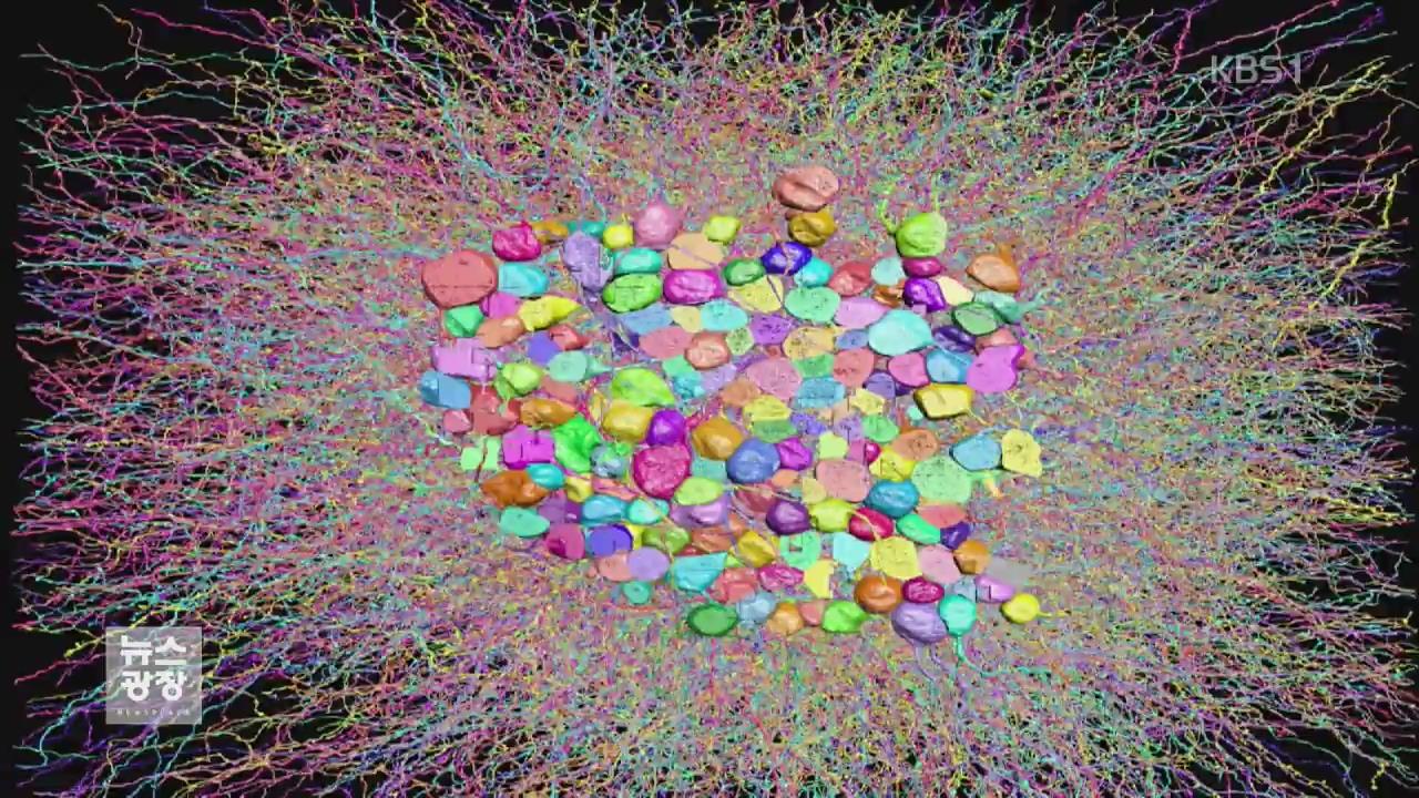 '시각 뇌 지도' 첫걸음…녹내장 등 치료에 응용 기대