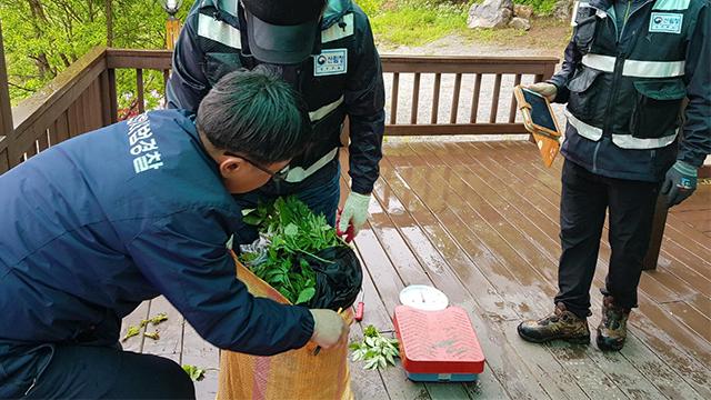 모집산행 통해 산나물·약초 불법채취…9명 적발