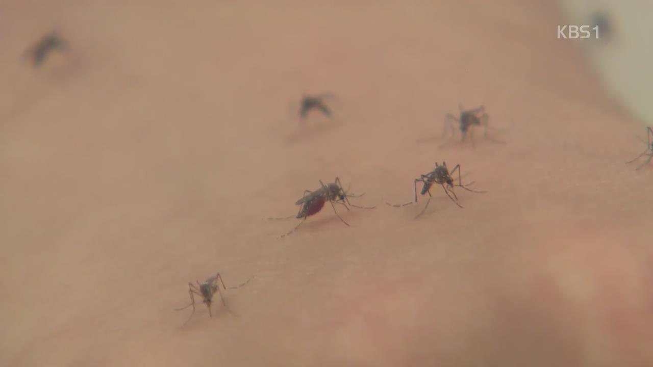 일찍 찾아온 더위…'모기 감염병' 비상
