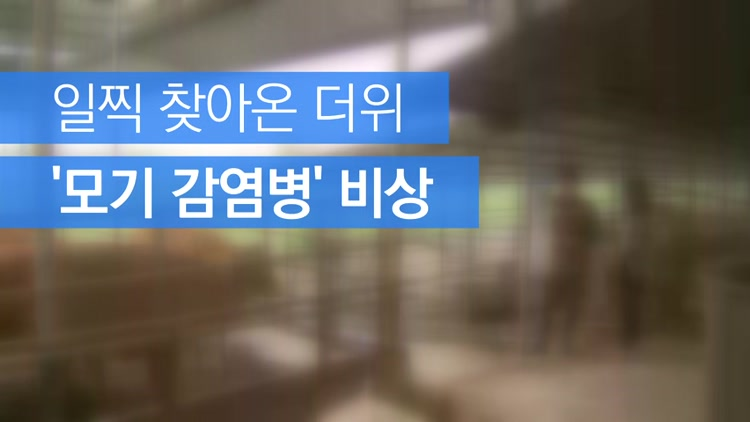 [자막뉴스] 일찍 찾아온 더위…'모기 감염병' 비상