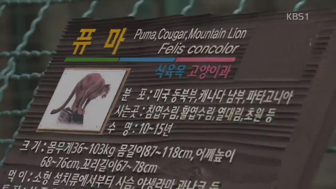 대전 오월드에서 퓨마 탈출…4시간 30분 만에 사살