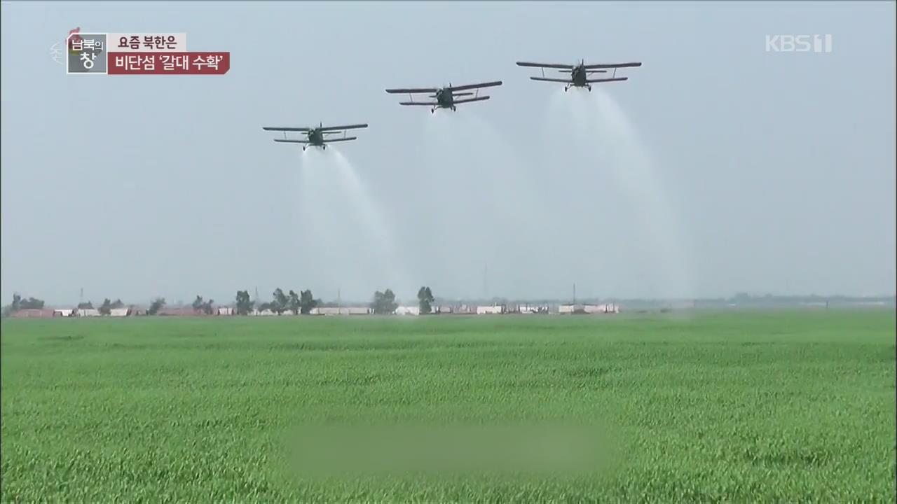 [요즘 북한은] 갈대 수확…'갈농사 풍년' 외