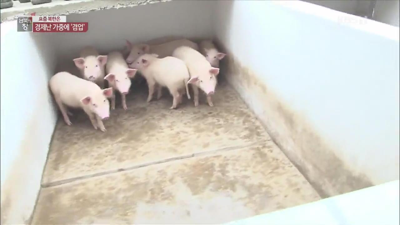[요즘 북한은] 돼지·물고기 사육…겸업 공장 ↑ 외