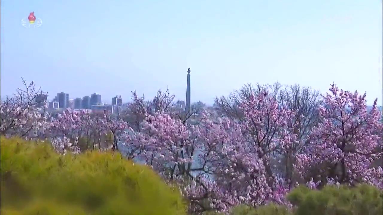 [북한 영상] 평양의 봄풍경