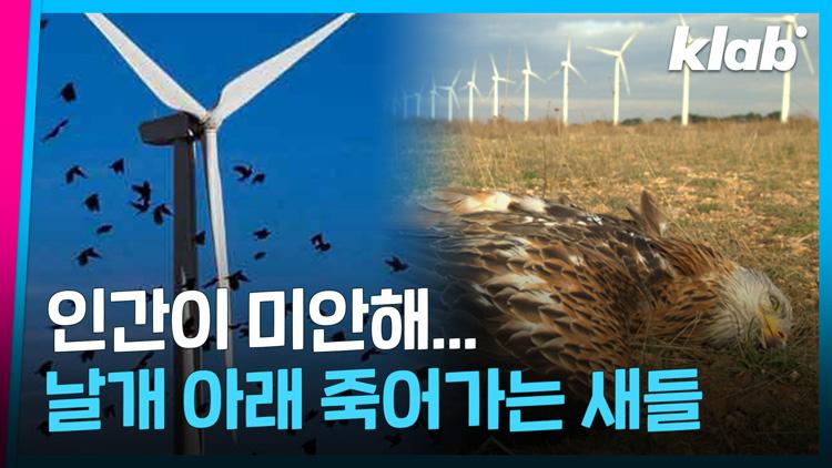 [크랩] 풍력발전기 날개를 색칠했을 뿐인데 놀라운 변화가?