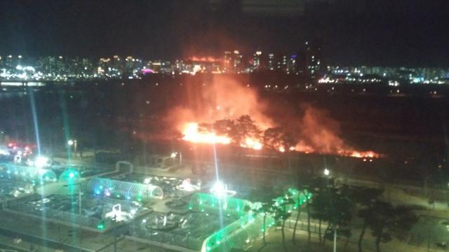 세종 금강변 방화 추정 갈대밭 화재…지난달 이어 두 번째