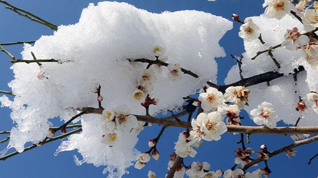 강원 영동지역 또 눈…산지 최고 5cm 예상