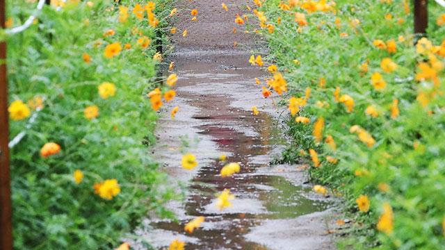 전국 곳곳 빗방울…오후에 중부 서해안부터 비