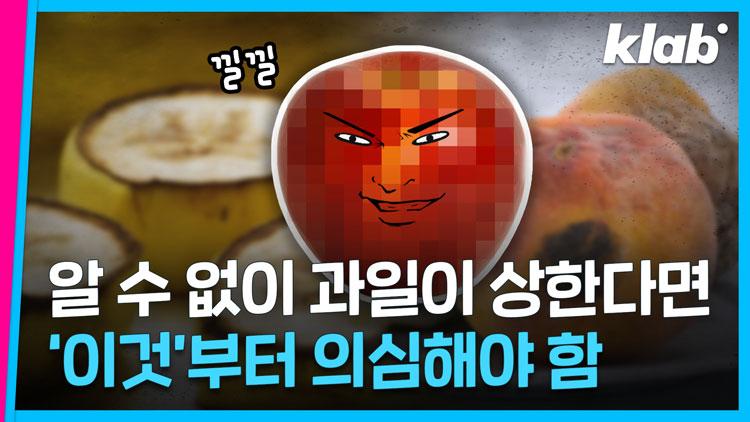 [크랩] 냉장고 속 '사과'…꼭 따로 보관해야하는 이유